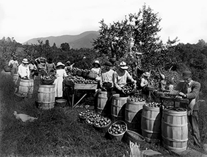 VBR - Apple Picking 1920s